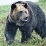 熊が北海道の札幌や都市の市街地に出没する件について思うこと